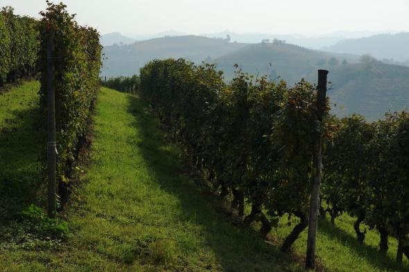 Piemont  34
